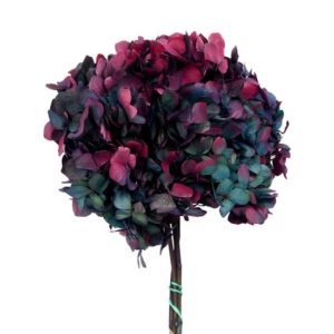 hortensia-preservada-bicolor-hrt-2680