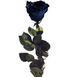 Rosa-Negra-Preservada-Eterna