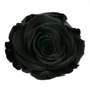 Rosa-Negra-Preservada-Eterna2