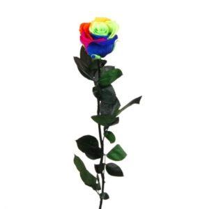 multicolor_rosa-preserva
