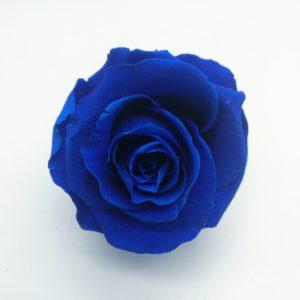 rosa-azul-preservada_1