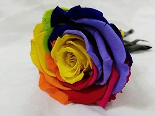 rosa-multicolor
